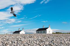 Lapwing in flight. Lapwing flying over two houses under beautiful blue sky with white clouds in Wales near Puffin Island stock photos