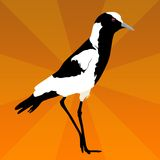 Lapwing on orange sunburst Stock Photography