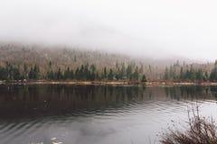 Laque et forêt étonnantes de vue images libres de droits