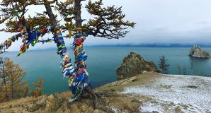 Larício no banco do Lago Baikal fotografia de stock