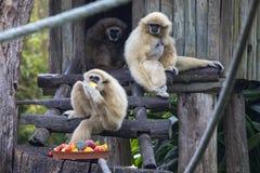 Lar Gibbons arkivfoton