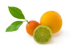 Laranja, cal e mandarino no branco Foto de Stock Royalty Free