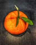 A laranja da clementina com folhas e a haste unida no preto surgem imagens de stock