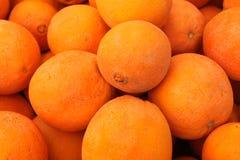 Laranja de Cara Cara, sinensis 'Cara Cara' do citrino foto de stock royalty free
