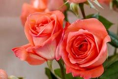 Laranja de Rosa Imagem de Stock