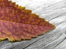 Autumn Orange imagem de stock