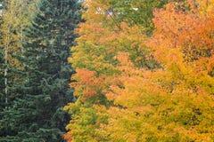 Laranja do verde amarelo da folha Imagens de Stock
