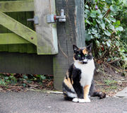 Laranja o gato de gato malhado Imagem de Stock Royalty Free