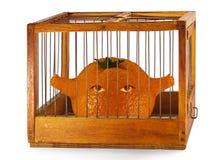 Laranja, prisioneiro na gaiola. Imagem de Stock