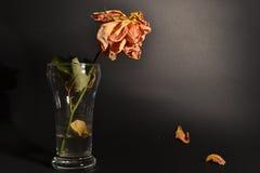 A laranja secada aumentou em um vidro fotos de stock royalty free