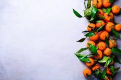Laranjas alaranjadas das tangerinas, os mandarino, clementina, citrinas com as folhas verdes no fundo claro, espaço da cópia fotografia de stock