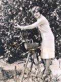 Laranjas da colheita da mulher de uma árvore fotos de stock