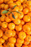 Laranjas das tangerinas Fotos de Stock
