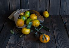 Laranjas das tangerinas, os mandarino, clementina, citrinas fotografia de stock royalty free