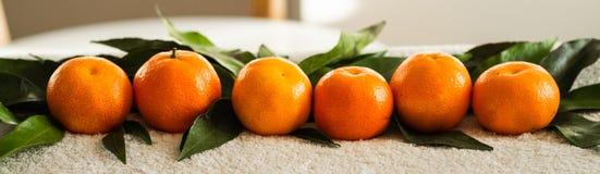 Laranjas das tangerinas, os mandarino, clementina, citrinas com folhas, fundo, espaço da cópia imagens de stock royalty free