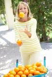 Laranjas de mnanipulação da mulher sênior por Wheelbarrow Imagens de Stock Royalty Free