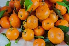 Laranjas do fruto Imagem de Stock
