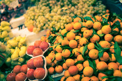 Laranjas em Florença Foto de Stock