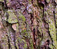 Larch bark Stock Images