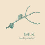 Larch branch Royalty Free Stock Image