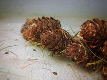 Larch cones Stock Photos