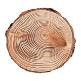 Larch Cross Section Of Tree Trunk Showing Rings Isolated On White Background. Stock Image