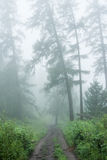 Larch in the fog. Trekking in the Altai Mountains Royalty Free Stock Photo