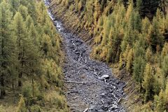 Larch forests in the Alps. In the late autumn Stock Photography