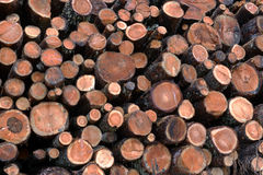 Larch logs at logging Royalty Free Stock Images