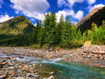 Larch in the mountain river Stock Images
