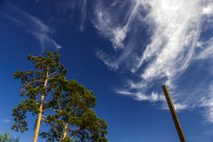 Larch on the sky background stock images
