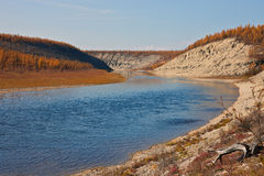Larch taiga on the banks of Siberian rivers Royalty Free Stock Photography