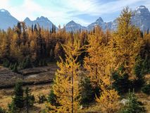 Larch Valley Royalty Free Stock Photos