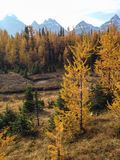 Larch Valley Royalty Free Stock Images