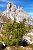 Larch wood and Cima Ambrizzola and Clroda da Lago Royalty Free Stock Photos
