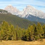 Larch wood and Le Tofane Gruppe, Dolomiti, Italy Royalty Free Stock Photo