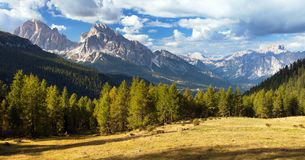 Larch wood, Le Tofane Gruppe and Hohe Gaisl, Dolomites Royalty Free Stock Photo