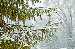 Snow-täckte trees i en vinter parkerar. arkivfoto