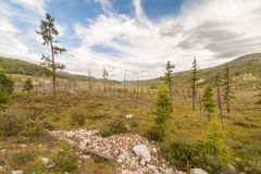 Larches in a mountain valley. East Sayan mountains. Royalty Free Stock Photos