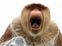 Large† ostrożnie wprowadzać małpa Obraz Stock