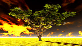 Large Acacia tree Stock Image