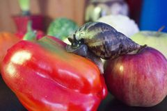 Giant snail crawls from Apple to sweet pepper stock image