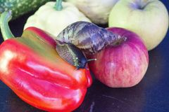 Giant snail crawls from Apple to sweet pepper stock images