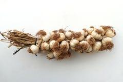 A large amount of garlic, garlic on a white background, a healing vegetable garlic, close-up garlic, on white ground, royalty free stock photos
