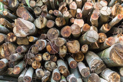 Large Amount of Stacked Logs Stock Image