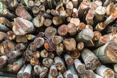 Large Amount of Stacked Logs Stock Image
