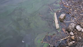A large amount of trash polluting our waters stock footage