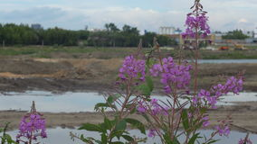 A large amount of trash polluting our waters. Waste and flowers stock footage