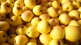 Large amount yellow apples stock video