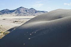 The large andy dunes in the great basin royalty free stock photo